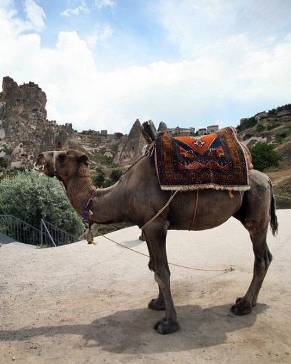 Kapadokya deve turu - Kapadokya gün batımı deve turu